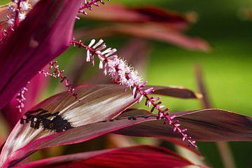Mexikanische Blume von Renald Bourque