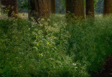 Dromerig bos van Hannie Kassenaar