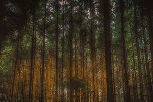 In het bos van Robbert Ladan