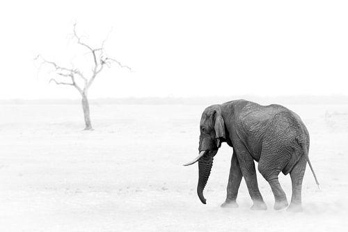 Elephant and Tree van Thomas Froemmel