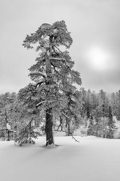 Winterparadijs zwart-wit van Denis Feiner