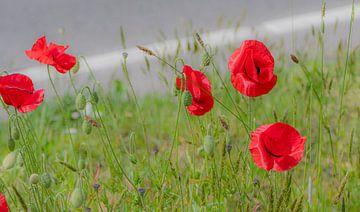 Mohnblumen am Straßenrand von Ingrid Aanen