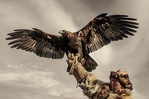 Kazach Eagle Hunter #4