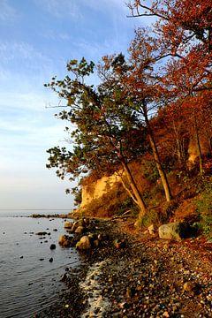 Schöne Boddenküste van Ostsee Bilder