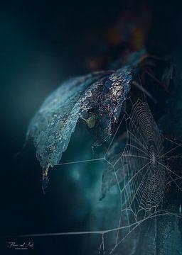 Spinnenweb bij dageraad van Flower and Art