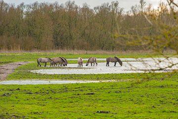 konikpaarden 3 van Brian Morgan