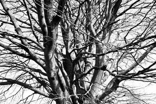 Boomtakken in de winter sur