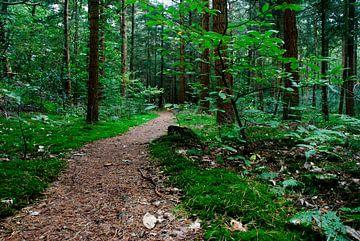 Het pad sur