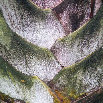 palm perfect van frederike simons