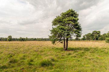 Grove den op Strijbeekse Heide sur Ruud Morijn