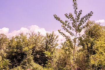 Lage Bergse Bos - Ansicht Nr. 1 von Deborah de Meijer