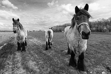 Zwart/Wit Paarden van Brian Morgan