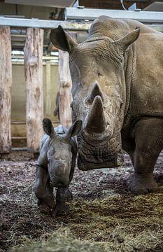 Nieuwsgierige neushoornmoeder met haar jong  van Rob Herstel