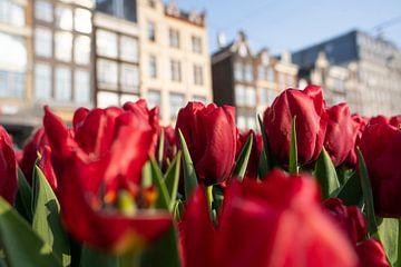 Bloeiende tulpen in Amsterdam von Thea.Photo