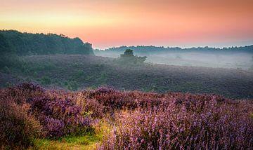 Sonnenaufgang über der Veluwe von Rietje Bulthuis