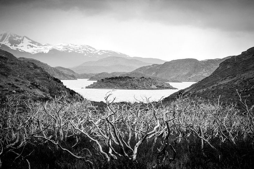 Verbrande bomen in Torres del Paine National Park in Patagonie in Chili van Jille Zuidema