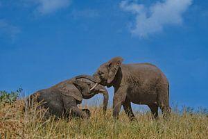 Jonge olifanten in het spel van pixxelmixx