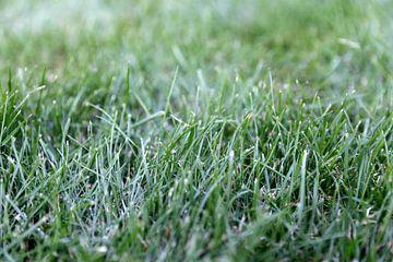 De l'herbe en gros plan