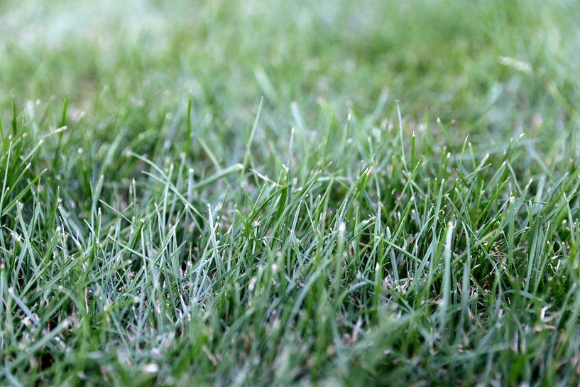 Close-up gras van Sander de Jong