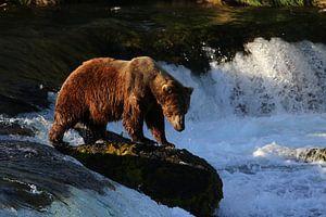 Bruine beer in Alaska van Jos Hug