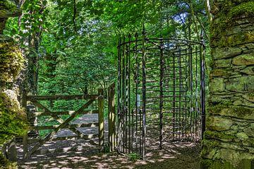 Porte tournante dans la forêt