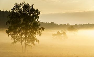 Goldener Nebel von Steven Driesen