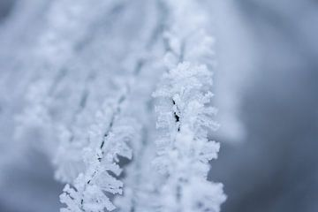 Detail Winterfoto, reif auf einem Zweig von Karijn Seldam