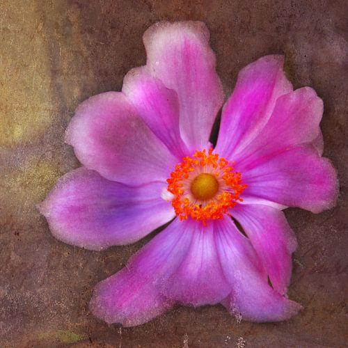 FLOWER - ORIGINAL