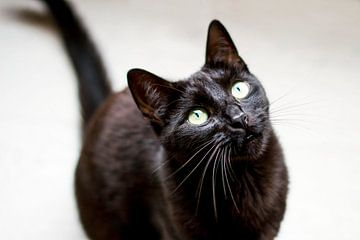 Zwarte kat met gele ogen von Jeantina Lensen-Jansen