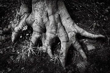 Vingerwortels boom abstract in zwart-wit van Dieter Walther