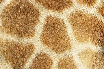 Giraffe von Jan van Reij