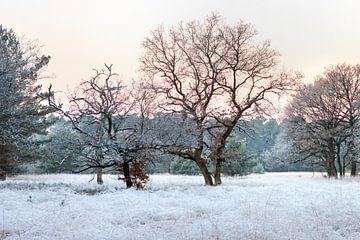 Bevroren landschap op de Veluwe van