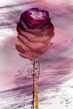 Blume mit Dornen von Jos Verhoeven