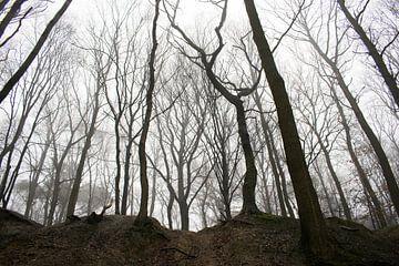 Griezelachtig bos met intimiderende bomen van Loes Huijnen