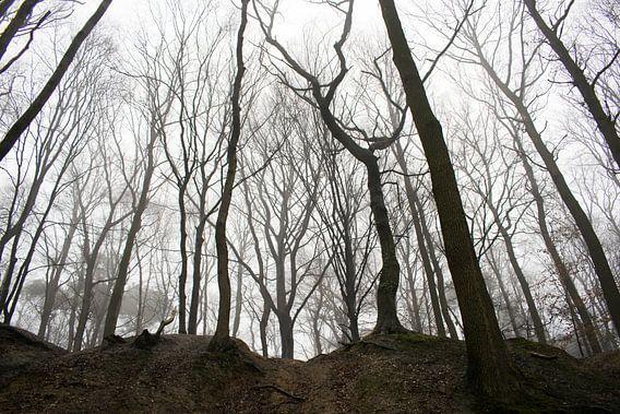 Griezelachtig bos met intimiderende bomen