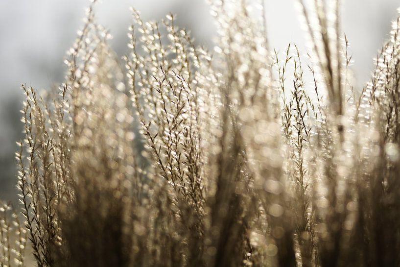 Winter glow.. van Carla Mesken-Dijkhoff