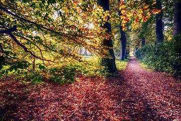 Bos in de herfst van