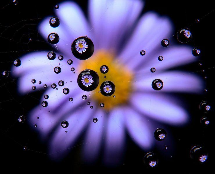 Caught in a web, bloemendruppels in een spinnenweb van Inge van den Brande