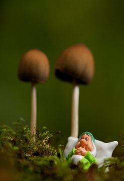 Heerlijk slapen onder een paddenstoel van
