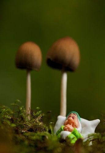 Heerlijk slapen onder een paddenstoel