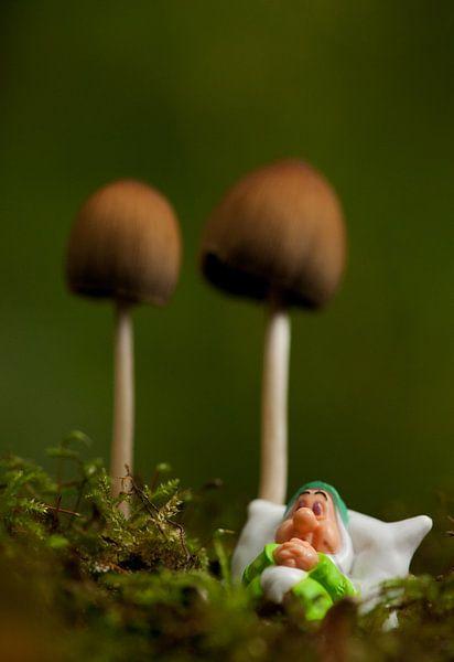 Heerlijk slapen onder een paddenstoel van Incanto Images