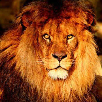 Löwenporträt von Heike Hultsch