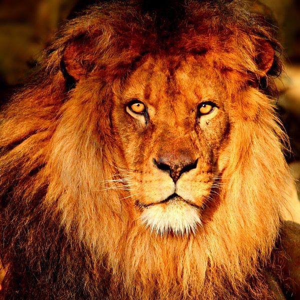 Löwenporträt van Heike Hultsch