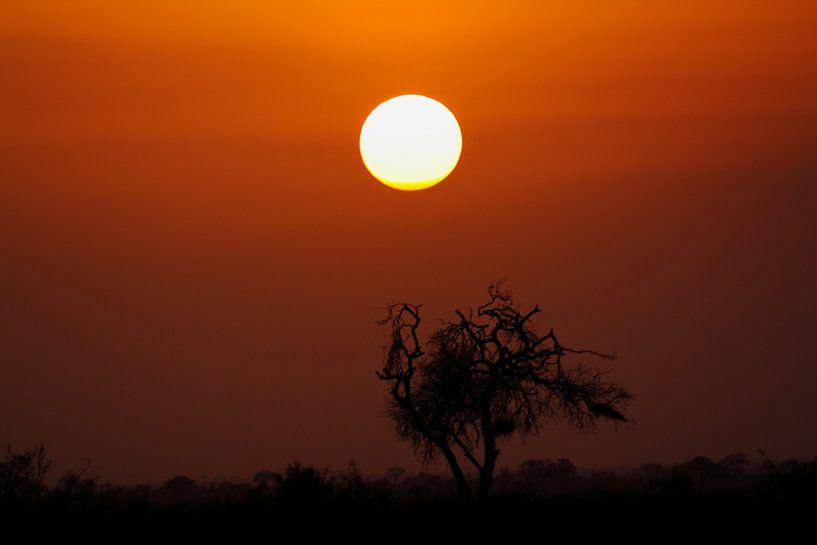 Sonnenuntergang bei Tsavo von LUNA Fotografie