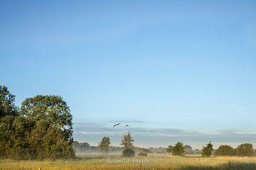 Morgenglühen von Marinella Geerts