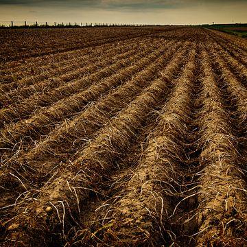 aardappelveld van nol ploegmakers