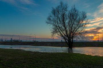 Boom in het water (Paardenwater Tiel) van Wijco van Zoelen