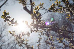 Lente takken in de zon van