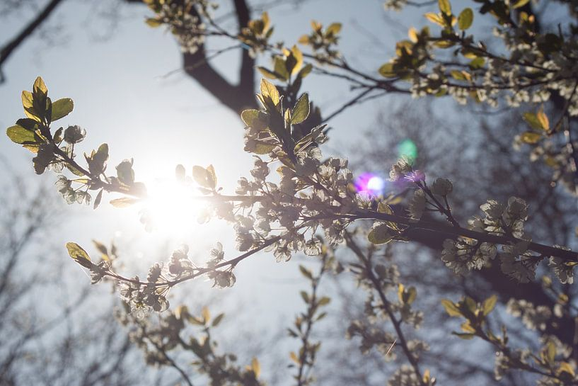 Lente takken in de zon van Callista de Sterke