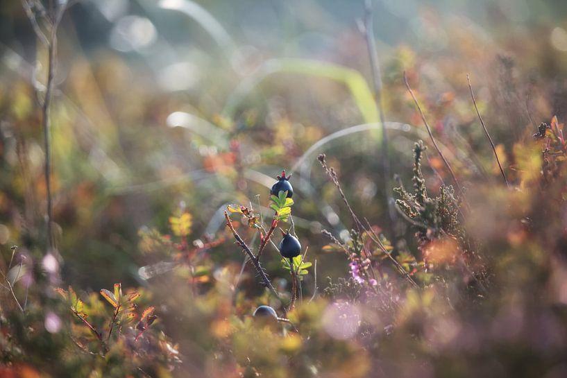 Crow berry van Jessica Van Wynsberge